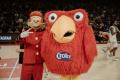 SPIROU X MONS-HAINAUT - La mascotte du Spirou Charleroi a trouvé de la compagnie.